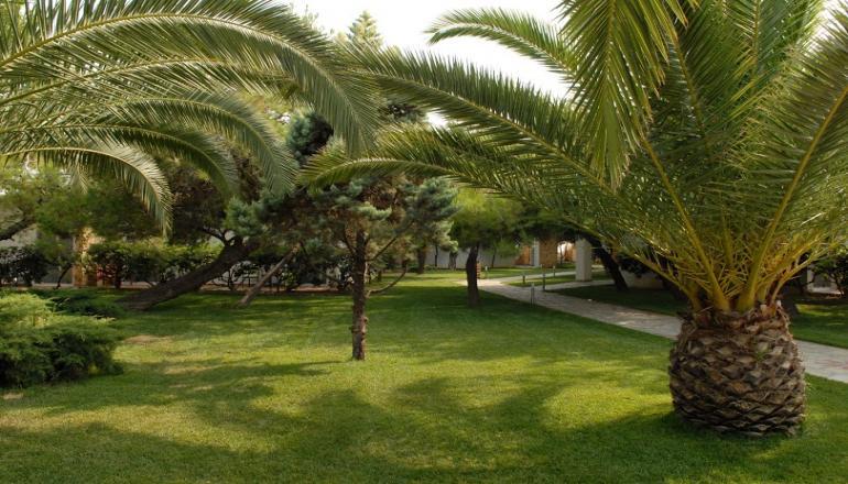Verde & Mare Bungalows - Κοκκώνι Κορινθίας ✦ 4